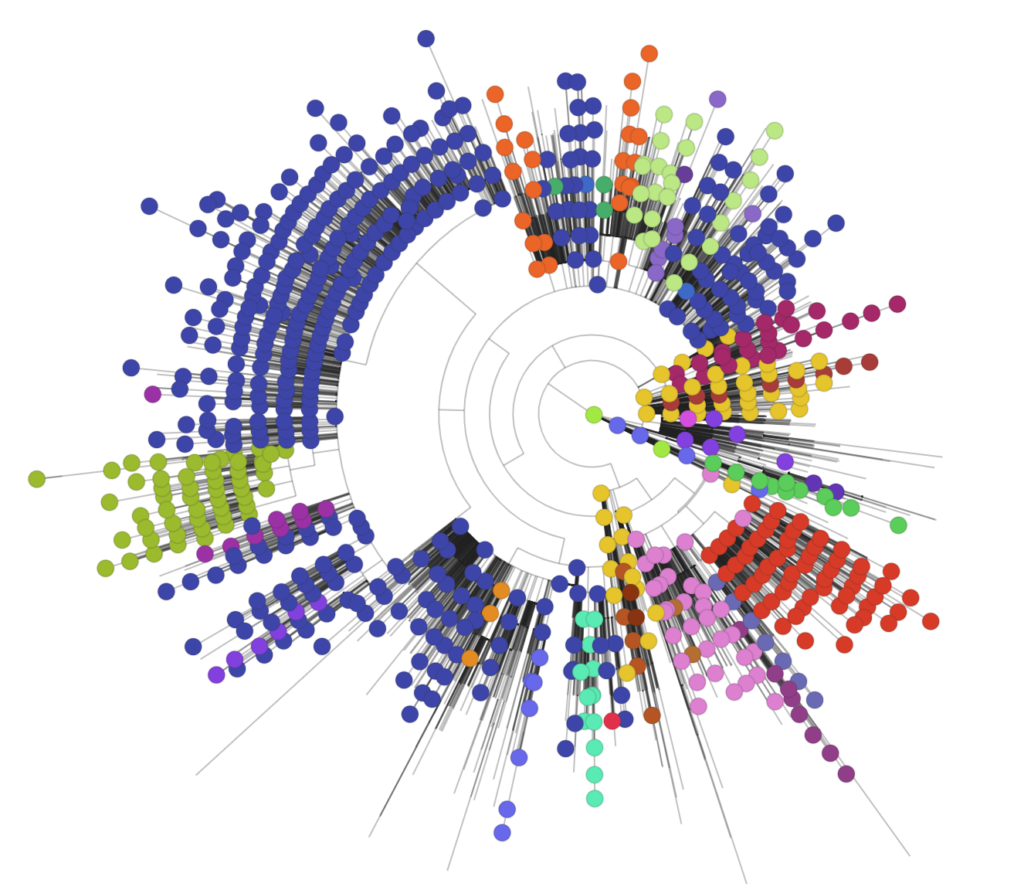 The phylogenetic tree indicates the position of the UK genomes within a global context.
