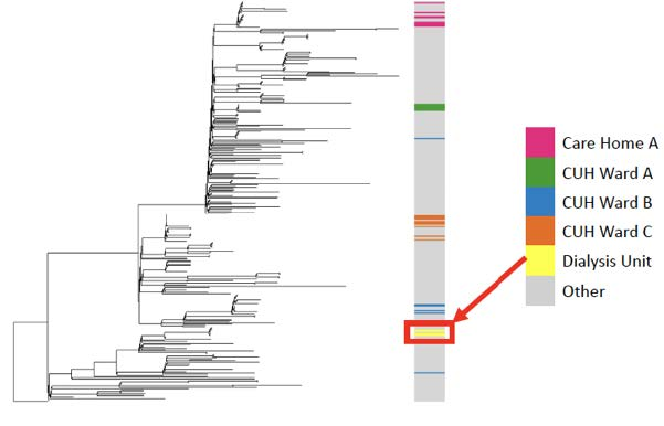 Figure 1: Phylogenetic tree of Cambridge University Hospitals NHS Foundation Trust samples showing dialysis unit cases in yellow.